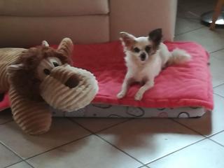 Sally lebt jetzt glücklich in Ungarn! 32633466ta