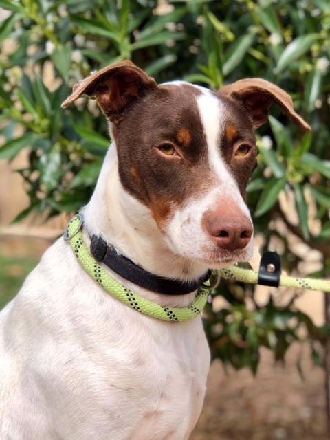 Bildertagebuch  - Kylo: ein bildschöner, eleganter, und cleverer Hund für aktive Menschen! - VERMITTELT- 32660371tv