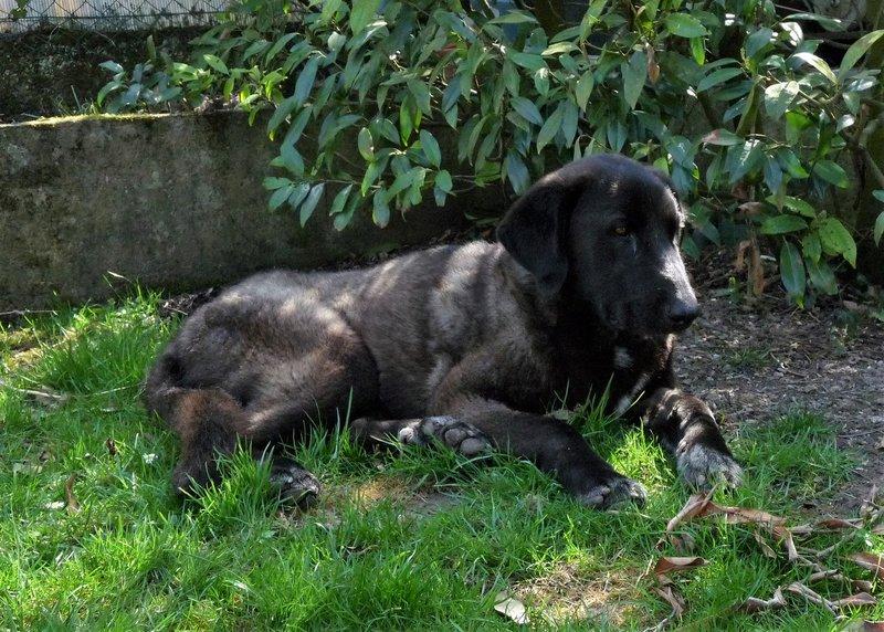 Bildertagebuch - IONA, großes, flauschiges Mädchen in der Farbe eines Wolfes - VERMITTELT! 32690562hi