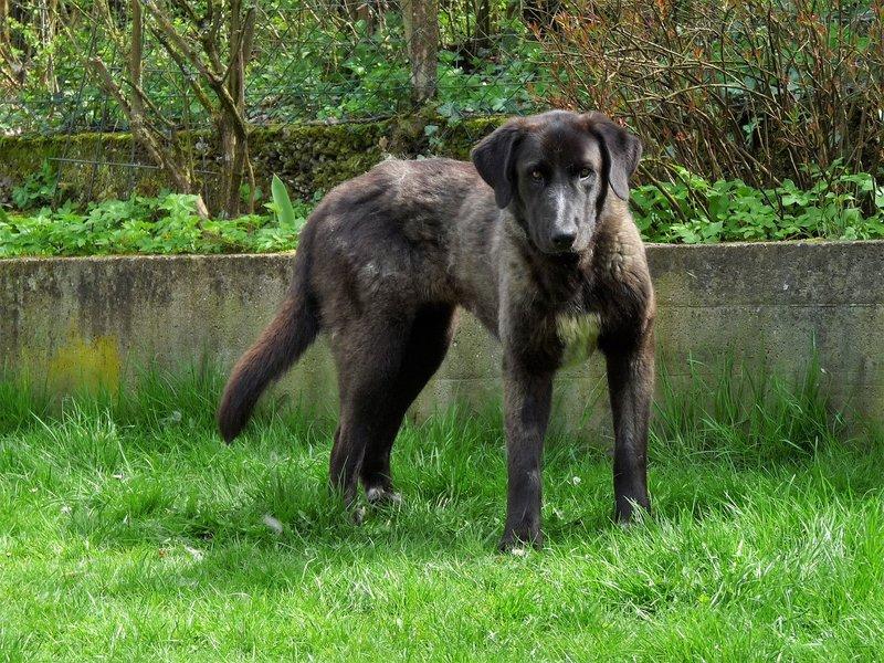 Bildertagebuch - IONA, großes, flauschiges Mädchen in der Farbe eines Wolfes - VERMITTELT! 32690589oi