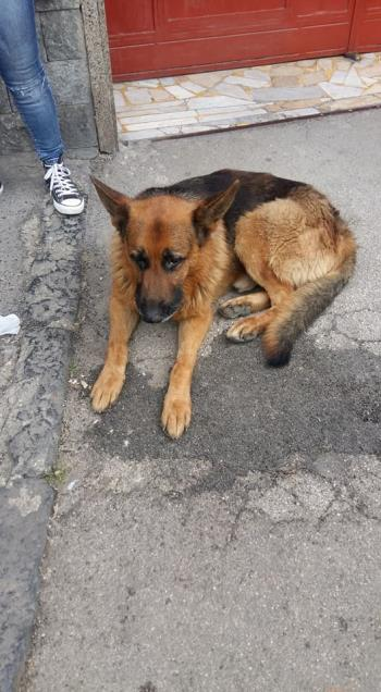 Bildertagebuch - Black, er irrte erschöpft durch die Straßen -- VERMITTELT -- 32839503fk
