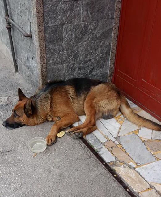 Bildertagebuch - Black, er irrte erschöpft durch die Straßen -- VERMITTELT -- 32839504lo