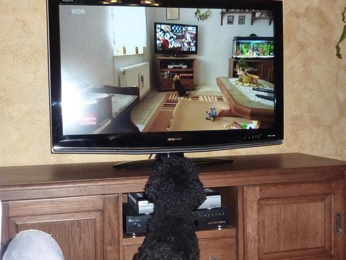 Fernsehn Gucken