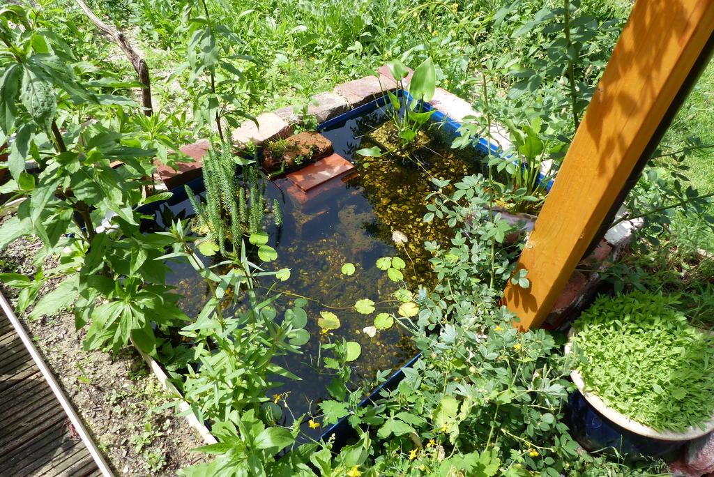 Mini-Wasserstellen im Garten - Seite 3 - Hortus-Netzwerk.info