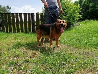 Brandy, Karmacs lebt jetzt glücklich in Österreich 32967785im