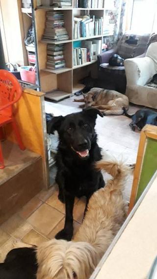 Chester, lebt jetzt glücklich in Deutschland 32991100xw