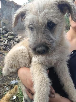 Loretta, Monor lebt jetzt glücklich in der Schweiz 33055088yy