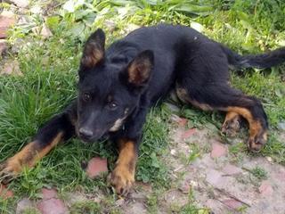 Kiara, Hajduszoboszlo lebt jetzt glücklich in Deutschland 33079531il