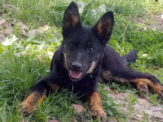 Kiara, Hajduszoboszlo lebt jetzt glücklich in Deutschland 33079532jo