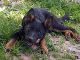 Kiara, Hajduszoboszlo lebt jetzt glücklich in Deutschland 33079533oz