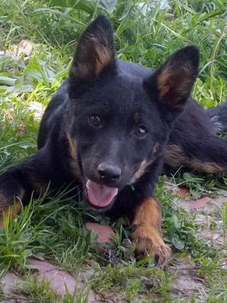 Kiara, Hajduszoboszlo lebt jetzt glücklich in Deutschland 33079535kw