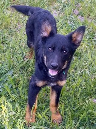 Kiara, Hajduszoboszlo lebt jetzt glücklich in Deutschland 33079538xy