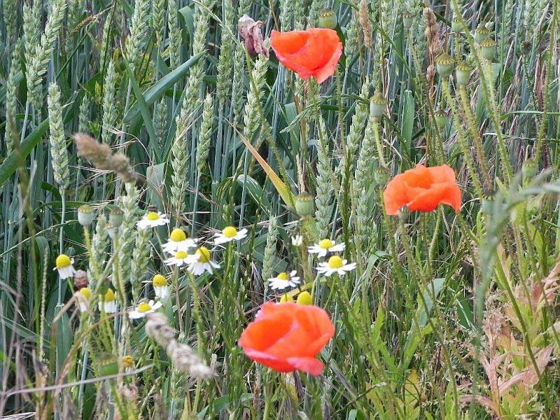 Wildblumen ( Sammelthread) - Seite 18 33223227xj
