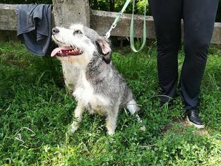 Dorothy lebt jetzt glücklich in Ungarn! 33265755zv