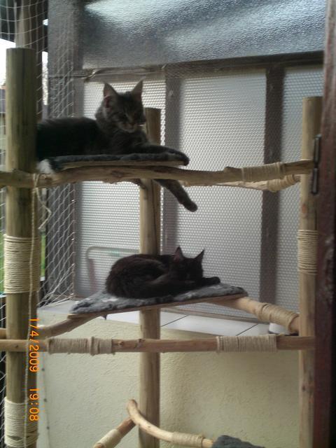 Selbstbau-Kratzbaum aus Naturholz-Stämmen - Katzen Forum