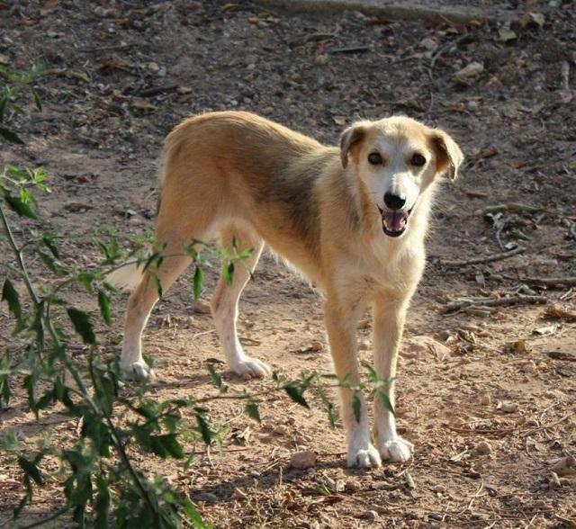 Bildertagebuch - Pluma, ein sensibles Hundemädchen sucht Menschen mit viel Geduld! Zuhause in Spanien gefunden! 33483162bk