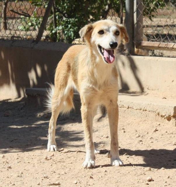 Bildertagebuch - Pluma, ein sensibles Hundemädchen sucht Menschen mit viel Geduld! Zuhause in Spanien gefunden! 33483163je