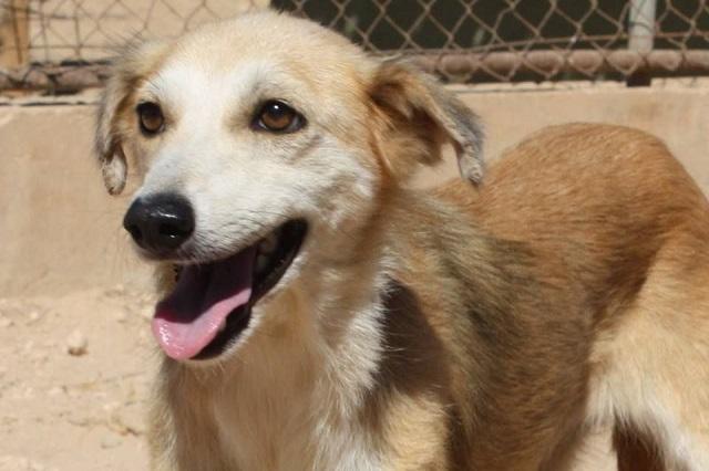 Bildertagebuch - Pluma, ein sensibles Hundemädchen sucht Menschen mit viel Geduld! Zuhause in Spanien gefunden! 33483164gt