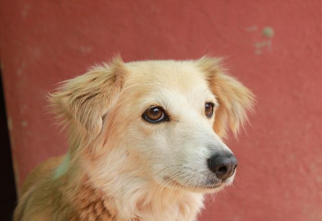 Bildertagebuch - Pluma, ein sensibles Hundemädchen sucht Menschen mit viel Geduld! Zuhause in Spanien gefunden! 33483171ke