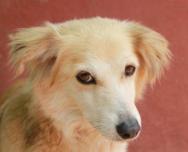Bildertagebuch - Pluma, ein sensibles Hundemädchen sucht Menschen mit viel Geduld! Zuhause in Spanien gefunden! 33483179th