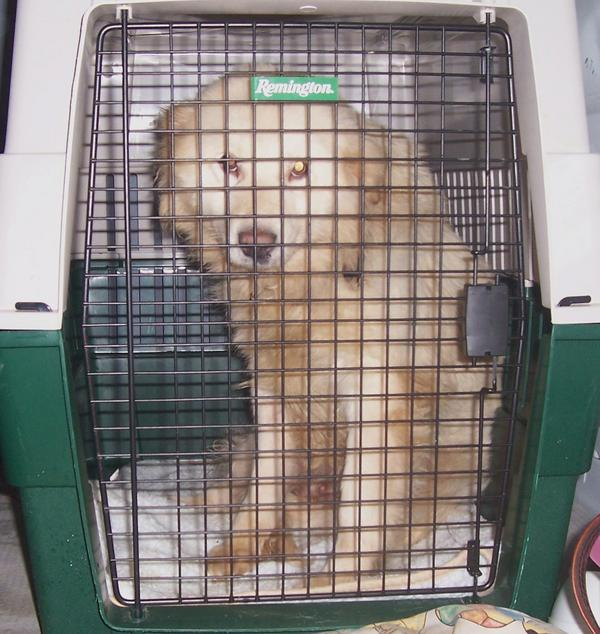 Hund in stabiler Transportbox