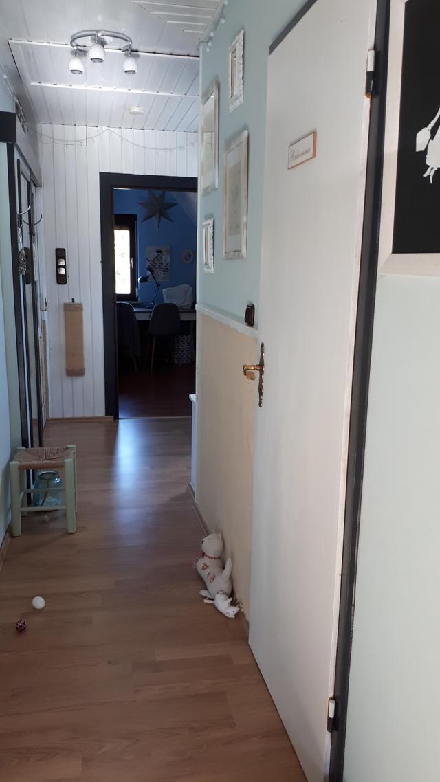 Die Wohnung Meiner Katzen