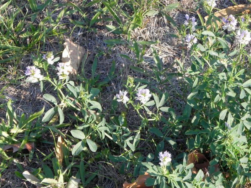 Wildblumen ( Sammelthread) - Seite 19 34077514jg