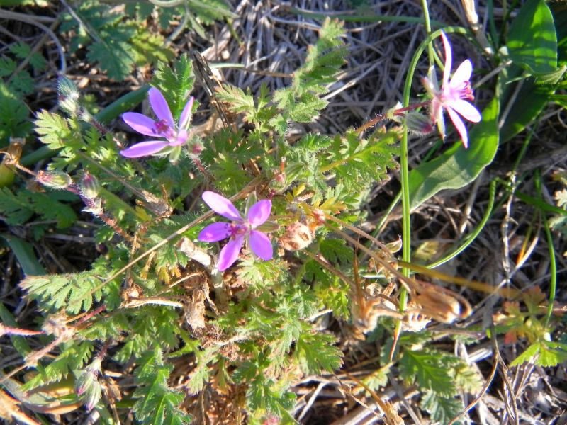Wildblumen ( Sammelthread) - Seite 19 34077522bc
