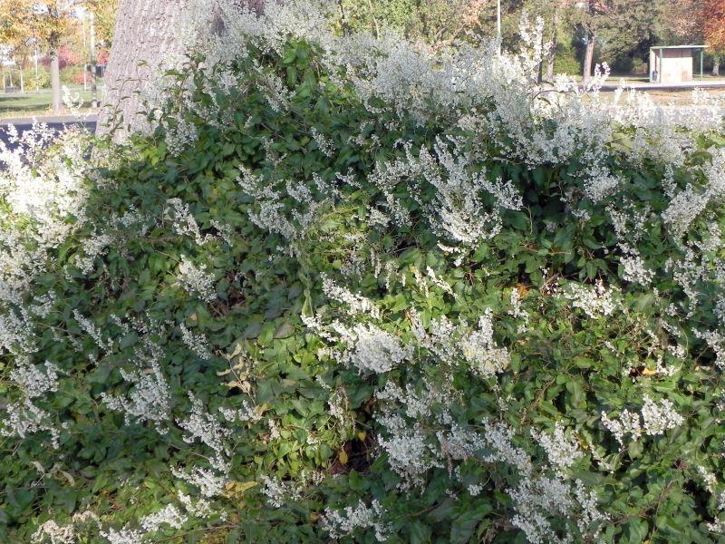 Wildblumen ( Sammelthread) - Seite 19 34077563kx