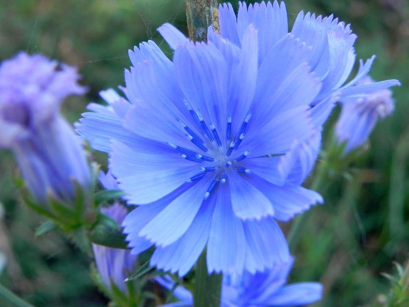 Wildblumen ( Sammelthread) - Seite 19 34077568zl