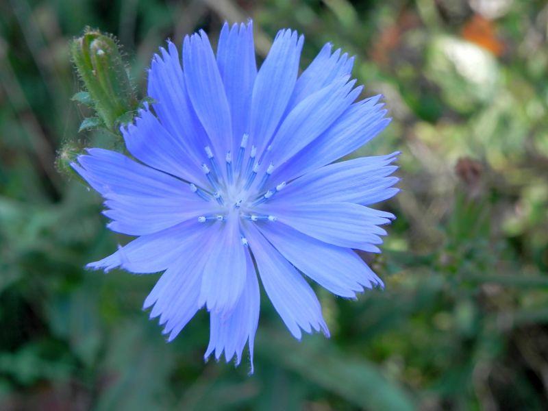 Wildblumen ( Sammelthread) - Seite 19 34077569ym