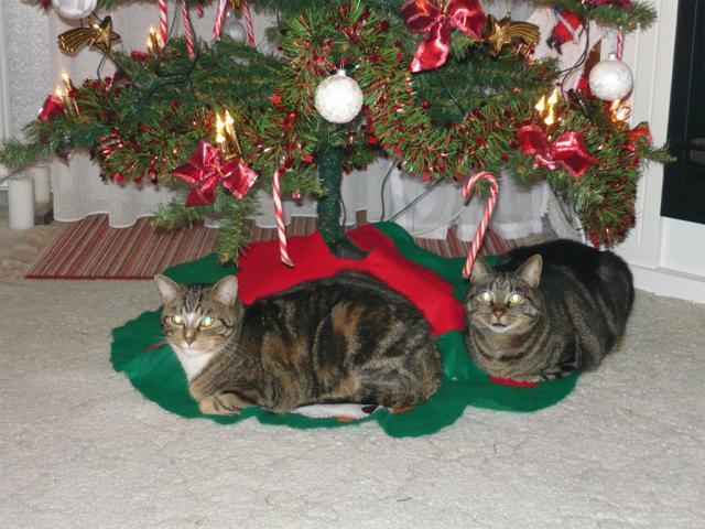 unsere zwei weihnachtskater wir frauen im netz das frauenforum. Black Bedroom Furniture Sets. Home Design Ideas