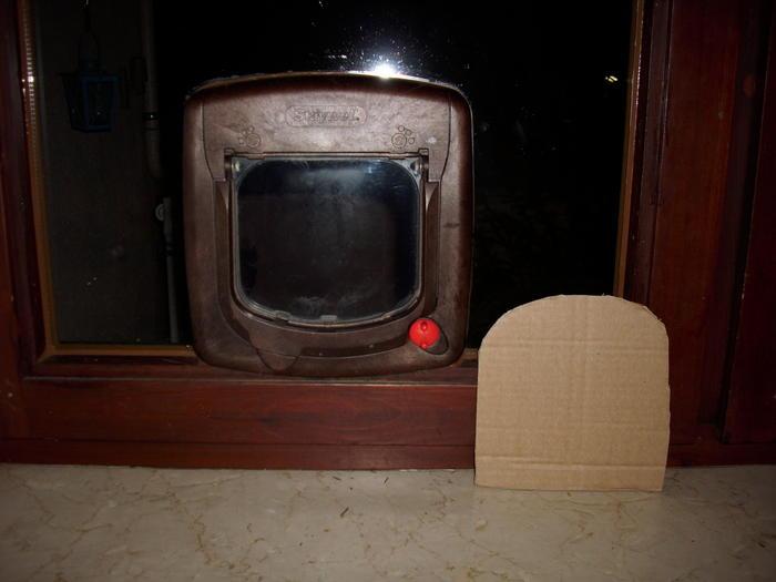 katzen forum katzenklappe vor nachteile. Black Bedroom Furniture Sets. Home Design Ideas