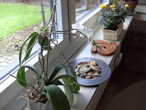 kraut r ben forum wer kennt sich mit orchideen aus. Black Bedroom Furniture Sets. Home Design Ideas