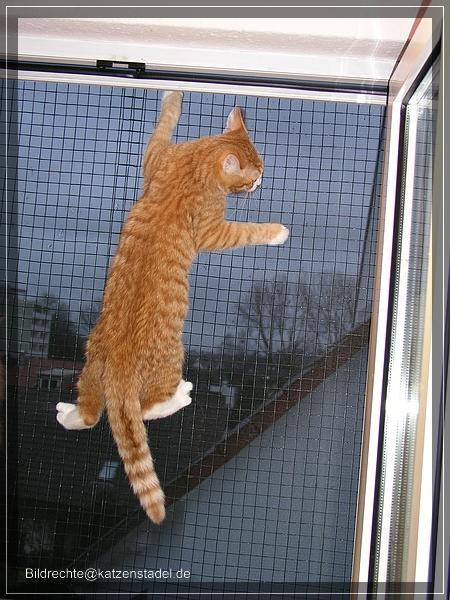 Katzen Balkon Dachfenster