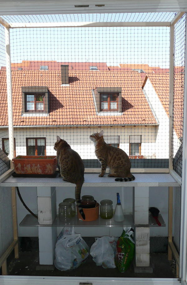balkon katzensicher machen ohne bohren katzennetz nrw die. Black Bedroom Furniture Sets. Home Design Ideas