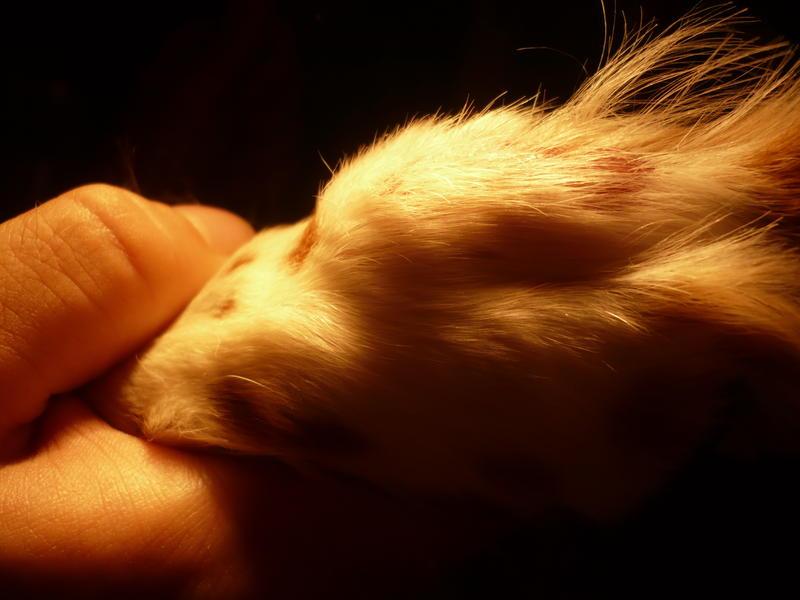 Lillys Pfoten Brauche Rat