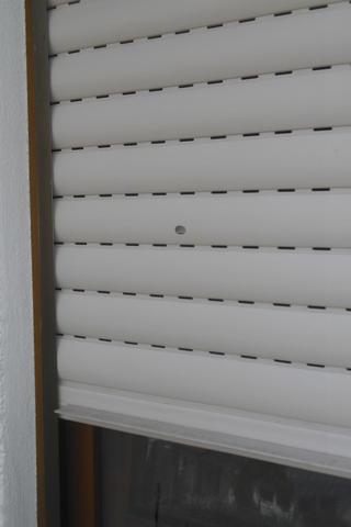hagelschaden berall was erholt sich wieder seite 1 pflanzendoktor mein sch ner garten. Black Bedroom Furniture Sets. Home Design Ideas