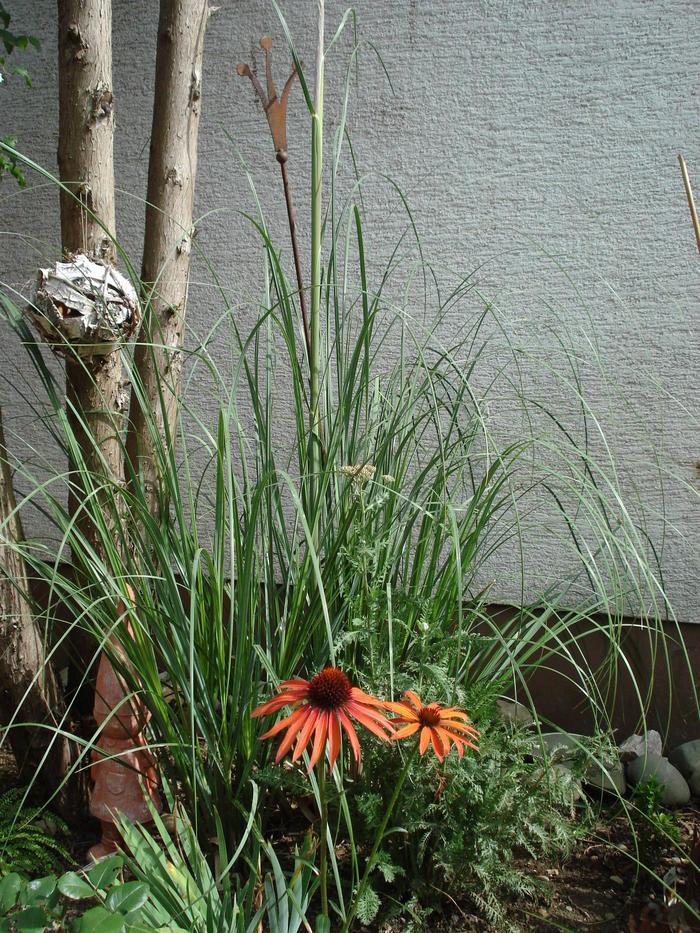 beet mit pampasgras, gräser im staudenbeet bitte um fotovorschläge - mein schöner garten, Design ideen