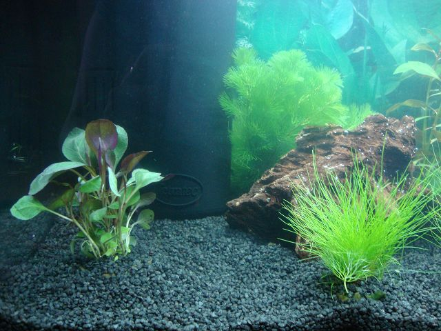 hilfe schleim an der wasseroberfl che aquarium forum. Black Bedroom Furniture Sets. Home Design Ideas