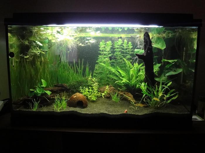 s wasser 126 liter mein neues traum aq aquarium forum. Black Bedroom Furniture Sets. Home Design Ideas