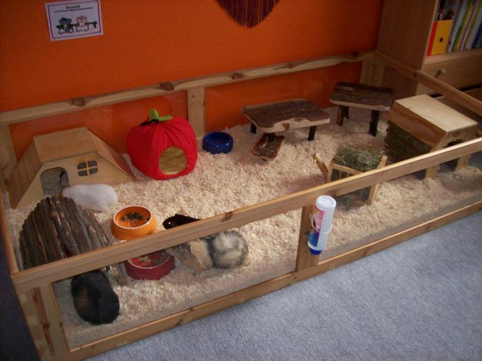 die weibchen das zwickchen meerschweinchen verhalten. Black Bedroom Furniture Sets. Home Design Ideas
