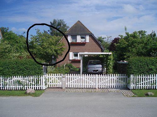 kugelbaum o als sichtschutz f r terrasse gesucht mein sch ner garten forum. Black Bedroom Furniture Sets. Home Design Ideas