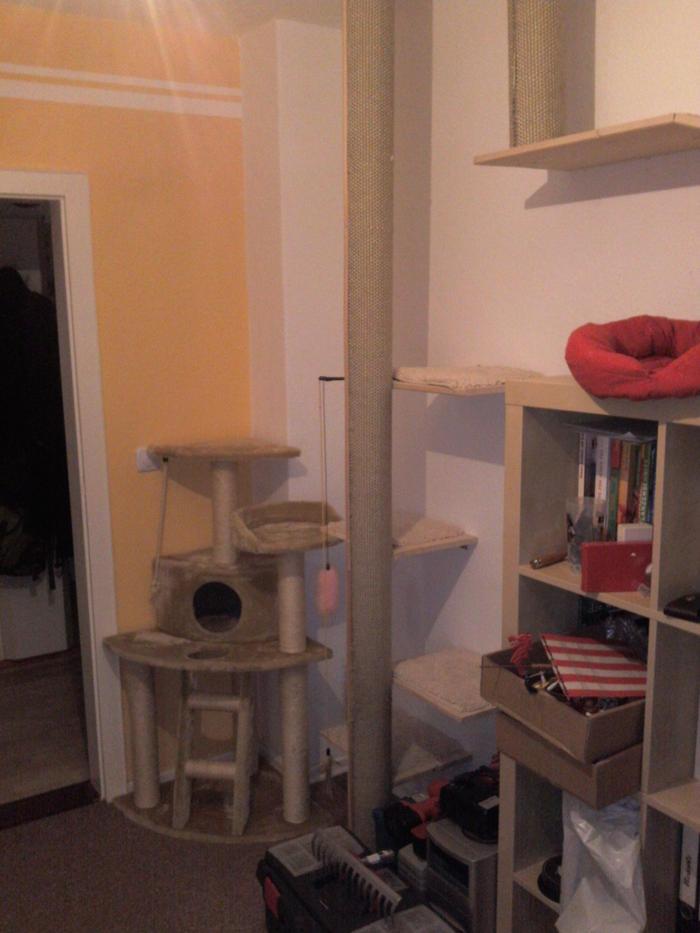 ideen f r katzengerechte wohnungsgestaltung katzen forum. Black Bedroom Furniture Sets. Home Design Ideas