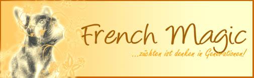 französische bulldogge mops forum - Das kleine Bullyforum - Portal 5920689