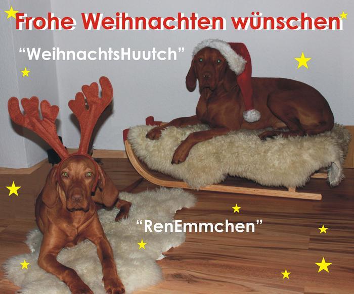 Weihnachtsgrüße Jagdlich.Emma 4 Monate Alte Hündin Das Forum Von Vizsla In Not E V