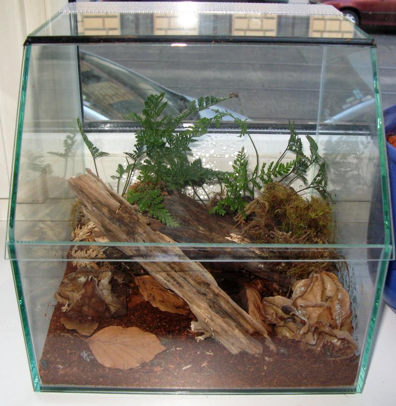 einige fragen zum verf ttern von kellerasseln seite 2 axolotl futter und futtertiere. Black Bedroom Furniture Sets. Home Design Ideas