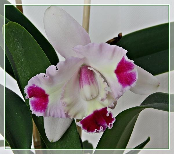 die sch nsten orchideen bilder seite 2 foto treff. Black Bedroom Furniture Sets. Home Design Ideas