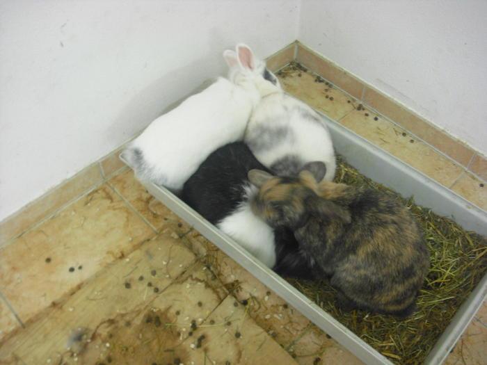 wir wissen nicht wohin seite 4 kaninchen. Black Bedroom Furniture Sets. Home Design Ideas