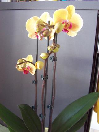 die sch nsten orchideen bilder page 4 mein sch ner garten forum. Black Bedroom Furniture Sets. Home Design Ideas